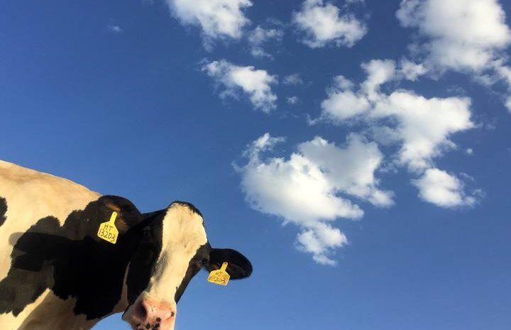 La industria alimentaria y las emisiones que produce son un gran reto de esta década